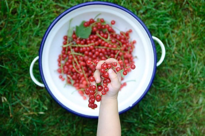 urban gardening mit kindern und Ribisel in Kinderhand