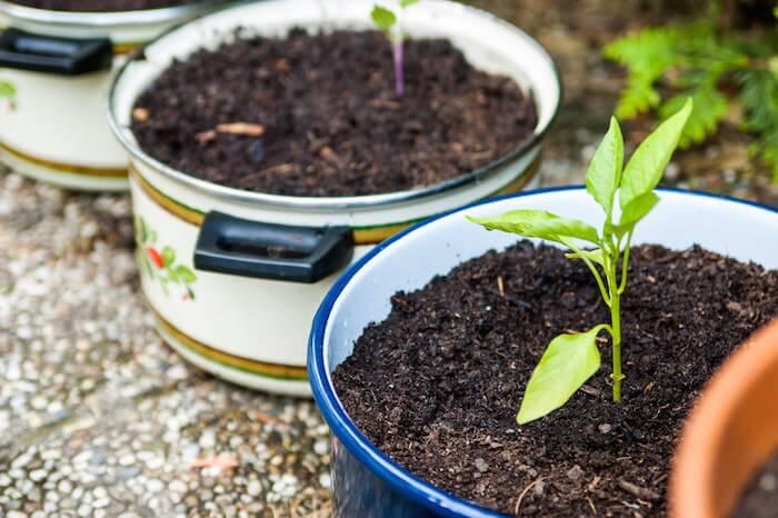 mini-and-me-kids-cooks-composts-urban-gardening-gaertnern-am-balkon-mit-kindern5