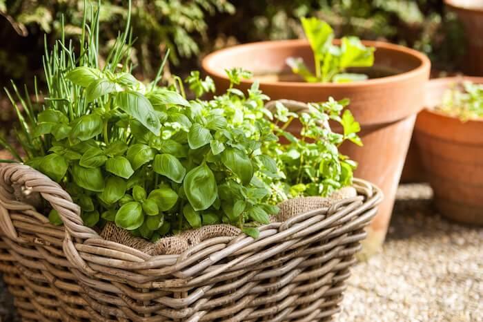 mini-and-me-kids-cooks-composts-urban-gardening-gaertnern-am-balkon-mit-kindern6