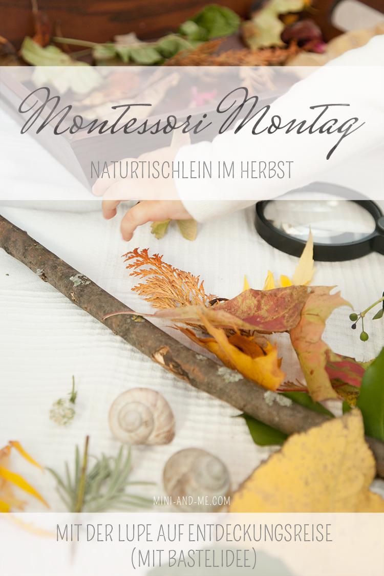 Montessori Montag: Naturtischlein im Herbst oder mit der Lupe auf Entdeckungsreise