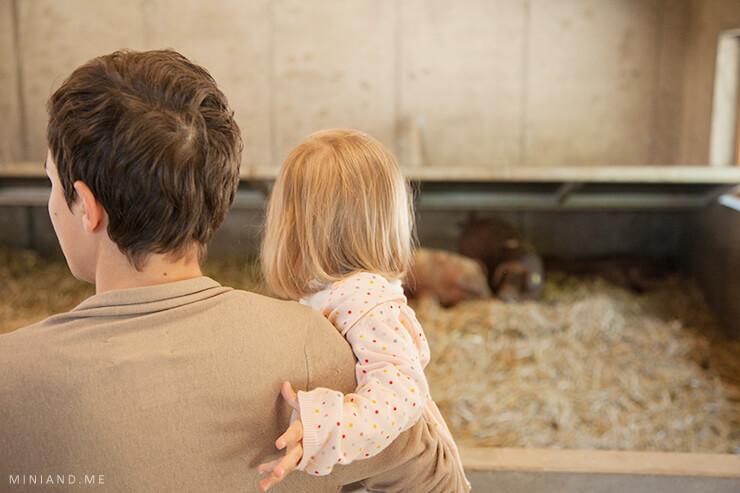 FairHof: Wie ein österreichisches Projekt die konventionelle Nutztierhaltung revolutionieren kann (bewusster Konsum, nachhaltig leben, bewusst einkaufen, Fleischherstellung, Lebensmittel, Bauernsterben, Bauernhof, Landwirtschaft, Bauer Unser, Konsumverhalten, Regionalität, Hofer, Hofkultur, Huetthaler, Konsumkritik, Mini and Me)