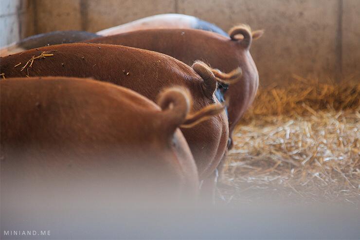 """Fair zum Menschen, fair zum Tier: Wie """"FairHof"""" die konventionelle Nutztierhaltung revolutionieren kann"""