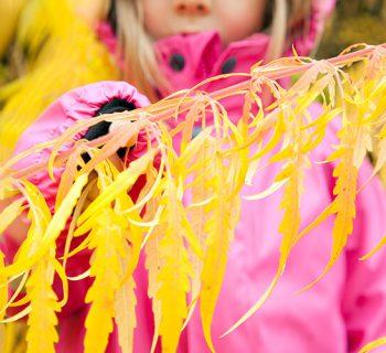 Wir feiern den Herbst: 10 Ideen für eine geniale Zeit im Freien für die ganze Familie